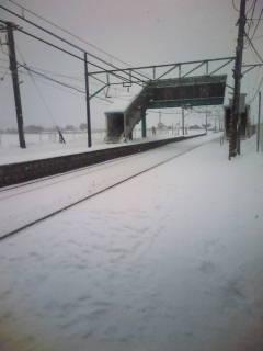 大雪?ツルン1