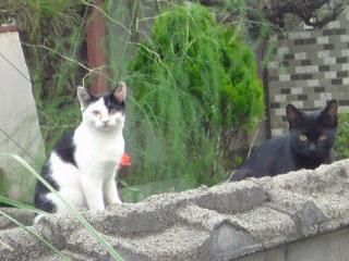 子猫ネコネコ1